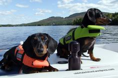 Two wieners on a boat. #wienerdog  http://celebritydachshund.com