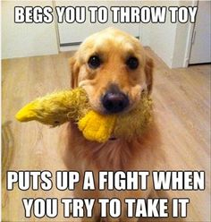 Of course they do.  It's not all about fetching, they need a little tug of war too!