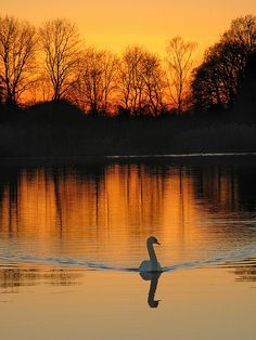 Sunset by the lake, Netherlands. to sit alone and enjoy every second of this beautifully serene sunset! Beautiful Sunset, Beautiful World, Beautiful Places, Beautiful Pictures, Beautiful Swan, Nature Pictures, Swans, Amazing Nature, Belle Photo