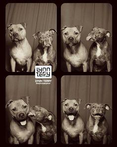 Tails from the Booth – Quand des chiens abandonnés s'éclatent dans un photomaton