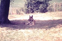Duke Stanton resting at Ash Grove farm