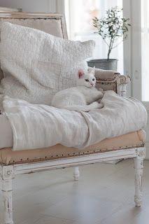 Cute white cat & a cosy chair