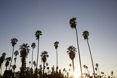 los angeles // palms in fall