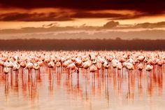 #Groupon #Kenya #travel #viaggi Groupon Viaggi - Kenya, gioiello africano