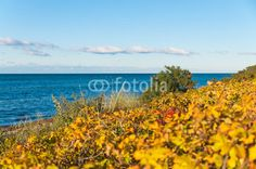Leuchtende Farben am herbstlichen Ostseestrand, am Meer, Herbstanfang, Herbstfarben, Dünenrosen, Sanddorn, Ostseedünen, Herbstsaison