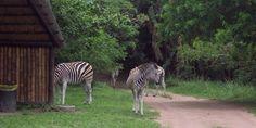 Kenneth Stainbank Durban South Africa, Visit South Africa, Animals, Animales, Animaux, Animais, Animal