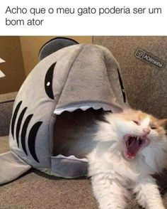 Llevenlo a hollywood Memes Humor, Top Memes, Funny Cat Memes, Funny Relatable Memes, Best Memes, Funny Cats, Cute Animal Memes, Funny Animal Quotes, Animal Jokes