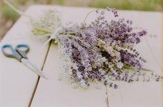 Wish to make some lavendar cupcakes soon.