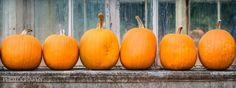 Five little pumpkins sitting on a fence...