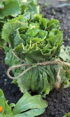 Le blanchiment ou comment forcer les légumes