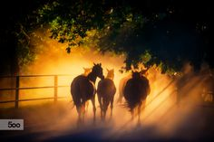 A herd of horses back to the pasture.