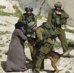 The Israeli let the dog attack an old woman. Who is the terrorist?- I honestly remember the day I watched this on the news, wasn't long ago. The looks on their faces are sickening, they find pleasure in hurting Palestinians.