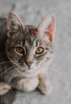 Cats: How To Choose So you're in the market for a feline, but which do you choose, a cat or a kitten? Here are important characteristics of kittens and adult cats. Fluffy Kittens, Cats And Kittens, Black Kittens, Crazy Cat Lady, Crazy Cats, Kittens Cutest, Cute Cats, Cat Tags, Gatos Cats