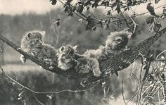 Photograph by Charles Reid, 1904. Source: PhotoSeed.