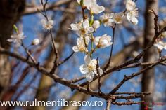 Primavara - Brasov - str lunga 209 Plants, Flora, Plant, Planting