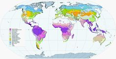Biome - Wikipedia, the free encyclopedia Plant Zones, Biomes, Continents, Habitats, Diagram, Map, World, Pictures, Animals