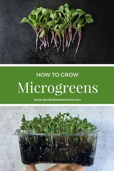 Microgreens are tiny, edible greens, grown from the seeds of leafy and cruciferous vegetables. Grow microgreens at home in six easy steps!
