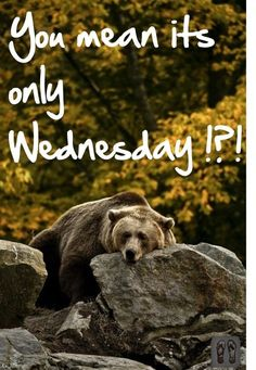 You Mean It's Only Wednesday quotes quote wednesday wednesday quotes happy wednesday happy wednesday quotes Wednesday Hump Day, Wednesday Greetings, Happy Wednesday Quotes, Good Morning Wednesday, Wacky Wednesday, Thursday Quotes, Monday Quotes, Its Friday Quotes, Good Morning Good Night