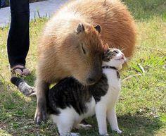 L'amitié vue par les chats | Anna Galore Le blog
