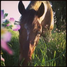 Wildflower and pony