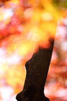 "500px / Photo ""Autumn Illumination"" by Ken Shimo"