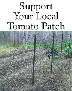 Ideas for supporting tomato plants.  A whole row for tomatoes, cukes, etc. planted on the far side, and shade tolerant lettuces, radishes and beets underneath.