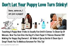 When puppy has accidents, what to do naturally with Thieves Household Cleaner or essential oil.
