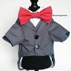 Costume Ideas, Costumes, Little Boy Blue, Pet Boutique, Boy Dog, Yorkie, Cool Photos, Sewing Projects, Dogs