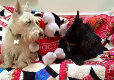 Sherman Snoopy Andrew on my Scottie Dog Quilt