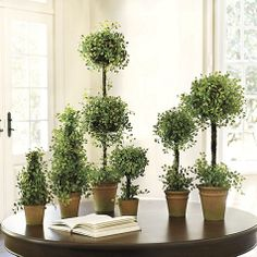 Button Leaf Topiaries
