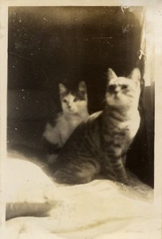 Cookie and Fritz, 1940 | 40 Sweet Cat Photos Of The '40s