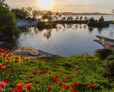 Alesund, Fjord, Stavanger, Hygge, Water, Bucket, Outdoor, Small Island, Exotic Plants