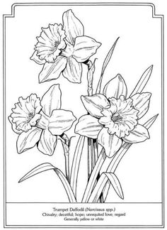 Daffodils - The Language of Flowers Coloring Book Flower Sketches, Flower Line Drawings, Art Drawings, Flower Coloring Pages, Coloring Book Pages, Language Of Flowers, Painting Patterns, Colorful Flowers, Spring Flowers