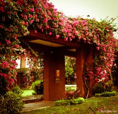 Ilove it BUT our West Texas wind would take care of them Beautiful Flowers Garden, Beautiful Gardens, Bahay Kubo, Filipino Culture, Garden Arches, Garden Park, Secret Gardens, Garden Buildings, West Texas