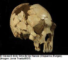 YA TENÉIS DISPONIBLES LOS NUEVOS CONTENIDOS DE LA REVISTA DE CASTILLA Y LEÓN JUNTO AL TEMA DESTACADO DE LA SEMANA:  Fosiles de Atapuerca protagonistas en un estudio científico sobre la evolución de la cara humana http://revcyl.com/www/index.php/ciencia-y-tecnologia/item/6878-fosiles-de-atapuerca-protagonistas-en-un-estudio-cient%C3%ADfico-sobre-la-evoluci%C3%B3n-de-la-cara-humana