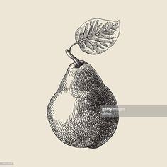 Vector illustration of pear. Ink Pen Art, Ink Pen Drawings, Black Pen Drawing, Line Drawing, Vegetable Drawing, Dotted Drawings, Small Canvas Art, School Art Projects, Ink Illustrations