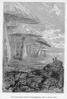 Forêt de champignons - Voyage au centre de la terre