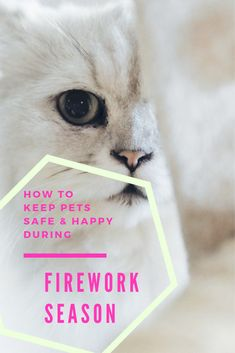 Discover Here How to Keep Pets Safe & Happy During Firework Season Autumn Activities, Craft Activities For Kids, Christmas Planning, Fun Arts And Crafts, Leaf Crafts, Bonfire Night, Pet Safe, Cat Health, Fireworks