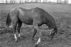Secretariat..yes he was a horse. After rolling in the mud, don't we love that