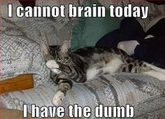 https://i.pinimg.com/236x/78/c0/6d/78c06dff1ad2ad4c730f981391cfa8bb--animal-memes-funny-animals.jpg