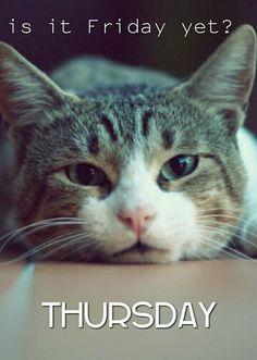 Ideas Funny Good Morning Quotes Humor Animal Pictures For 2019 Thursday Meme, Thursday Greetings, Thursday Quotes, Weekend Quotes, Weekend Meme, Thursday Pictures, Hello Thursday, Tuesday Wednesday, Throwback Thursday
