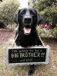 27 perfect pregnancy reveals starring the family pet | #BabyCenterBlog #PregnancyAnnouncements