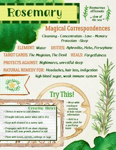 'Rosemary Grimoire Page' Poster by tysmiha Millions of unique designs by independent artists. Find your thing. 'Rosemary Grimoire Page' Poster by tysmiha Millions of unique designs by independent artists. Find your thing. Magic Herbs, Herbal Magic, Plant Magic, Green Witchcraft, Witchcraft Herbs, Magick Spells, Witch Herbs, Witchcraft For Beginners, Under Your Spell