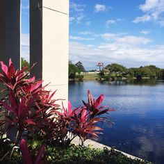 Fort Lauderdale Fort Lauderdale, Wanderlust, Instagram Posts