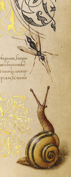 rosebiar:  Insects, Basil Thyme, and Land Snails (detail), Joris Hoefnagel, Georg Bocskay,