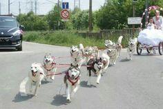 A husky wedding get away car!