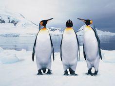 3 pinguinos