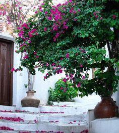 Walking around Skopelos Greece