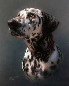 """Painting, """"Please don't scold me"""" Animal Paintings, Animal Drawings, Dog Artwork, Pastel Art, Dog Portraits, Dog Pictures, Animal Photography, Pet Birds, Dog Cat"""