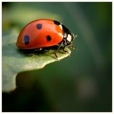 Lady bugs have always been know to be good luck!